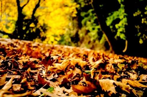 autumn garden 1