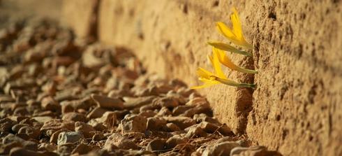 flower-growing