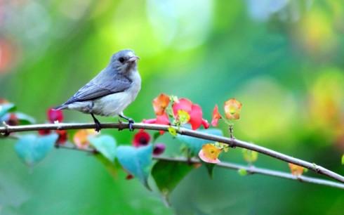 маленькая-птичка-на-ветке-1000x625